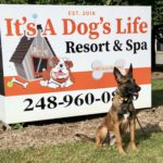 Dog Trainer in Wixom
