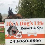 Best Dog Trainer in Wixom, MI