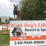 Dog Training in Michigan