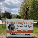 Affordable Dog Training in Wixom