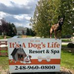 Best Dog Training Services in Wixom