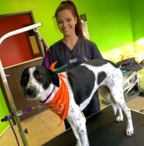 Dana Z Dog Groomer in Wixom