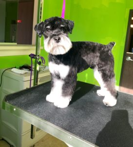 Pet Grooming in Wixom, MI