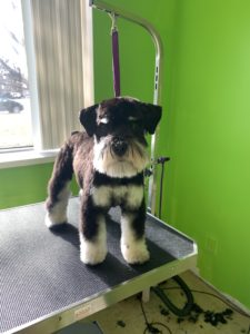 Affordable Dog Grooming in Wixom, MI