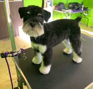 Wixom Dog Grooming